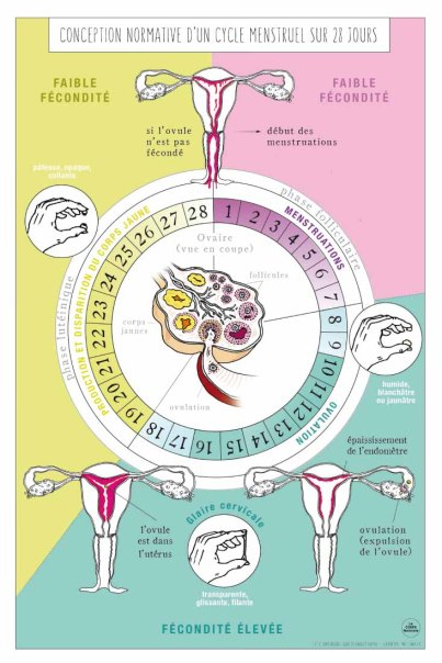 Conception normative d'un cycle menstruel sur 28 jours